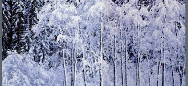 CD – A Winter's Solstice – 1998 CD – 冬至日 – 1998年