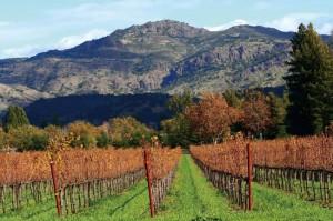 Autumn_in_Napa_Valley_viney
