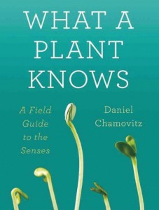 what-a-plant-knows-2