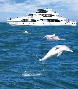 白海豚邮轮 副本副本